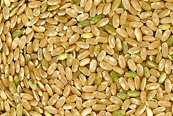 250px-Brown_rice.jpg
